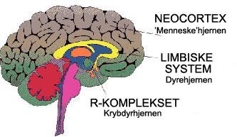 mennesket i hjernen